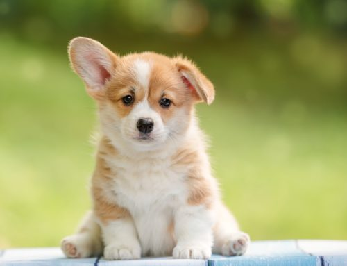 Top 5 Ways to Lead Your Puppy Down the Path to Success